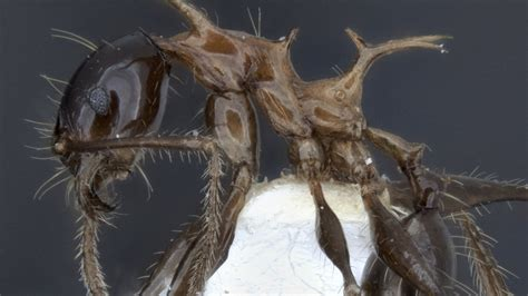 Scientists discover two new species resembling GoT dragons
