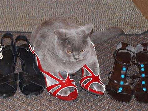 If I Fits, I Sits: 20 Cats That Prove There Is No Space